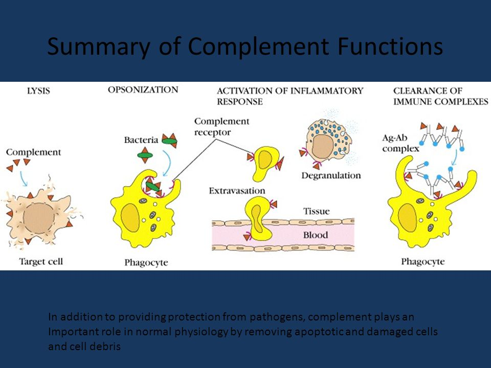 Summary of Complement Functions In addition to providing protection from pathogens, complement plays an Important role in normal physiology by removing apoptotic and damaged cells and cell debris
