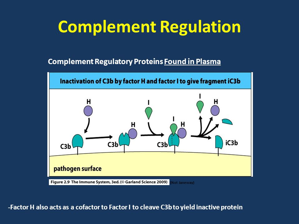 Complement Regulation (Not Janeway) Complement Regulatory Proteins Found in Plasma -Factor H also acts as a cofactor to Factor I to cleave C3b to yield inactive protein