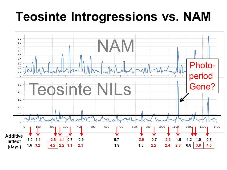 Teosinte Introgressions vs.NAM Additive Effect (days) Teosinte NILs 1.1 NAM Photo- period Gene.