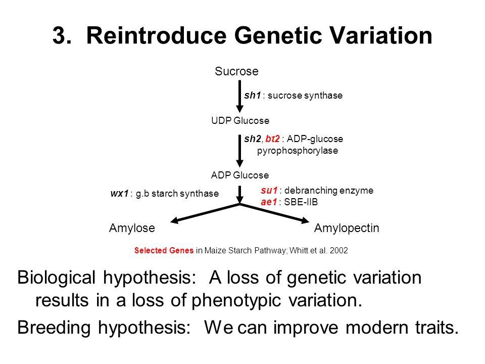 Sucrose UDP Glucose ADP Glucose AmyloseAmylopectin sh1 : sucrose synthase sh2, bt2 : ADP-glucose pyrophosphorylase su1 : debranching enzyme ae1 : SBE-IIB wx1 : g.b starch synthase Selected Genes in Maize Starch Pathway; Whitt et al.