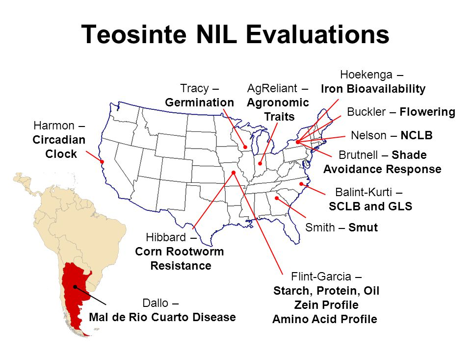 Teosinte NIL Evaluations Hibbard – Corn Rootworm Resistance Buckler – Flowering Brutnell – Shade Avoidance Response Balint-Kurti – SCLB and GLS Smith