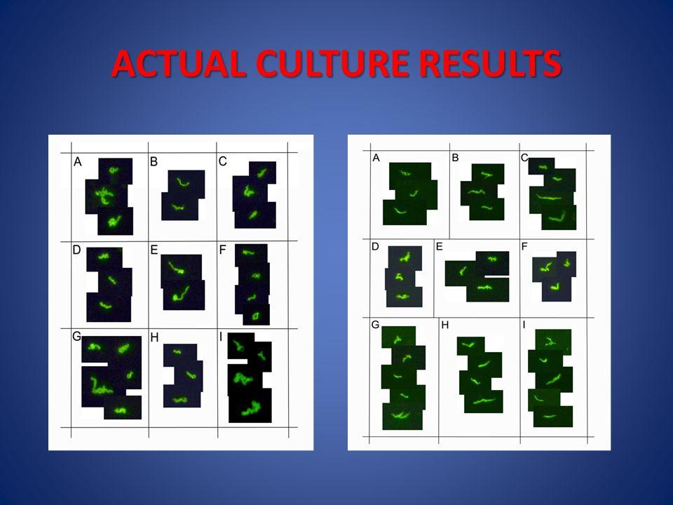 ACTUAL CULTURE RESULTS