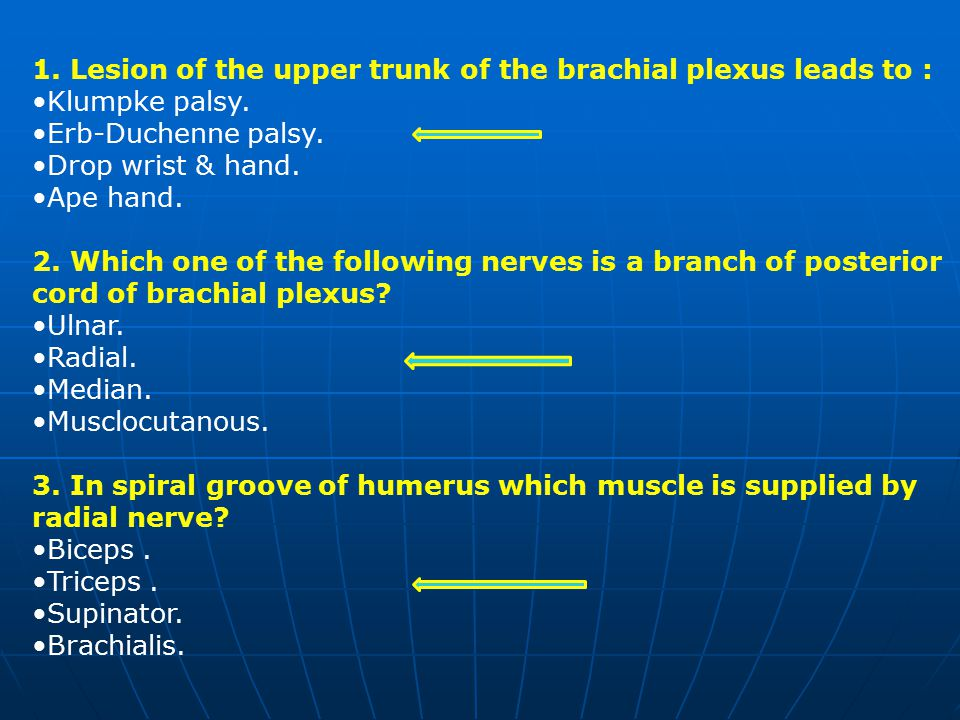 1.Lesion of the upper trunk of the brachial plexus leads to : Klumpke palsy.