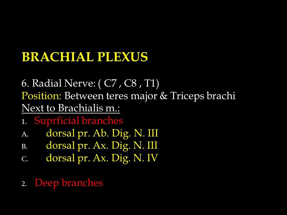 BRACHIAL PLEXUS 6.