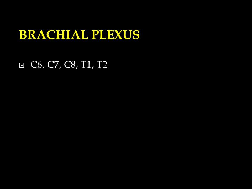 BRACHIAL PLEXUS  C6, C7, C8, T1, T2