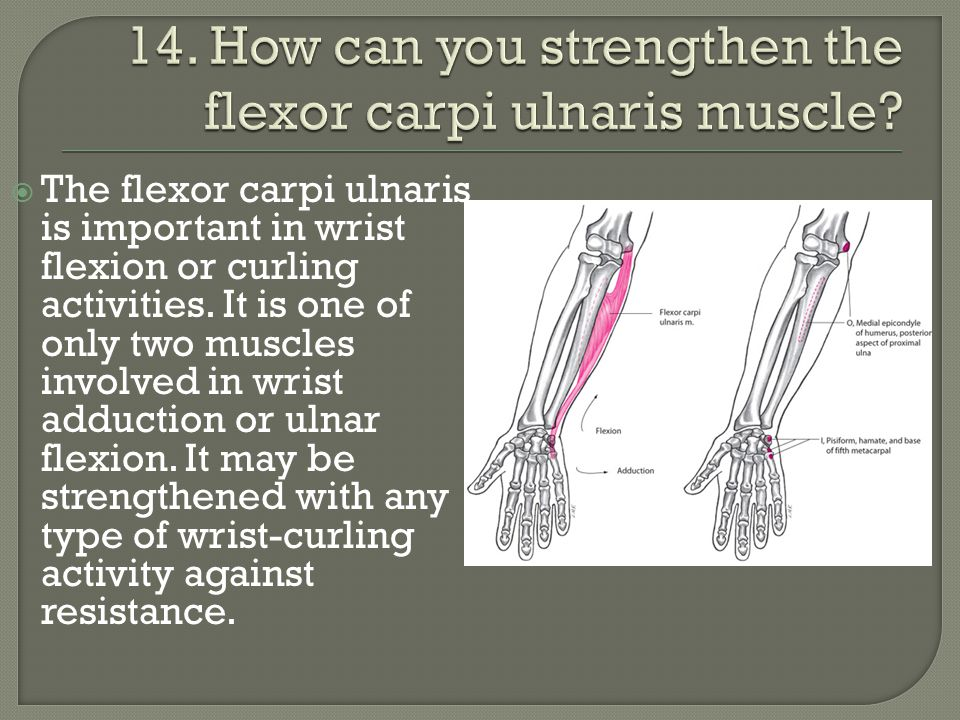 The flexor carpi ulnaris is important in wrist flexion or curling activities. It is one of only two muscles involved in wrist adduction or ulnar fle