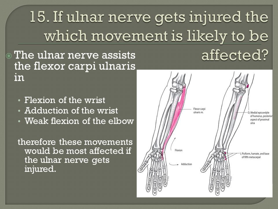  The ulnar nerve assists the flexor carpi ulnaris in Flexion of the wrist Adduction of the wrist Weak flexion of the elbow therefore these movements