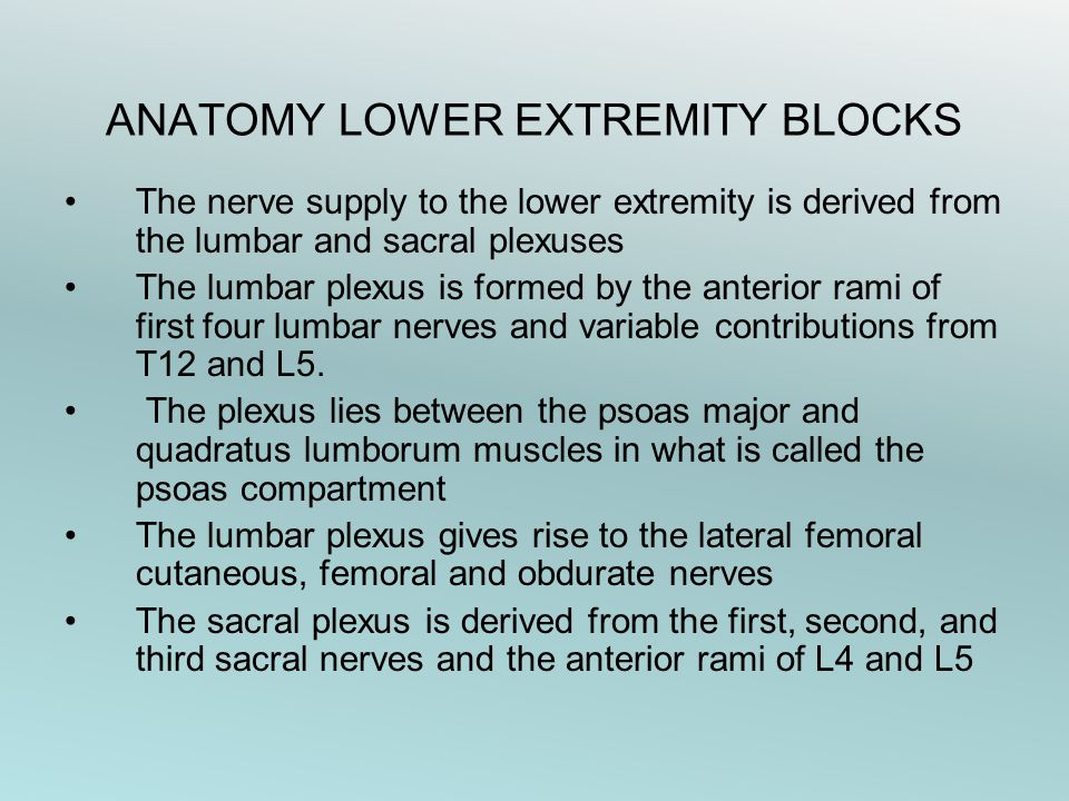 ANATOMY LOWER EXTREMITY BLOCKS The nerve supply to the lower extremity is derived from the lumbar and sacral plexuses The lumbar plexus is formed by the anterior rami of first four lumbar nerves and variable contributions from T12 and L5.
