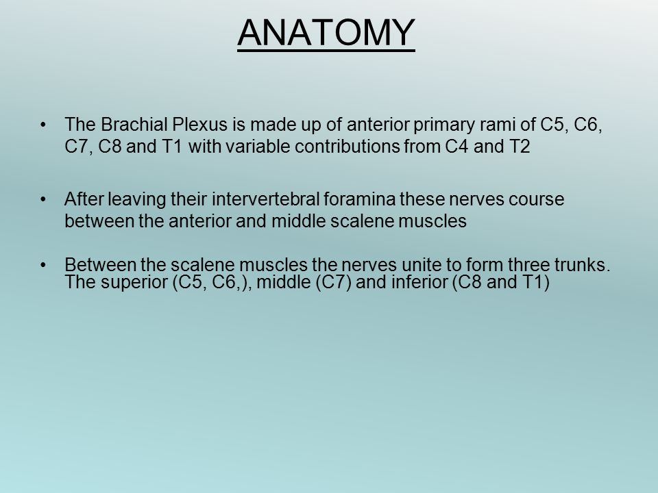 ANATOMY The Brachial Plexus is made up of anterior primary rami of C5, C6, C7, C8 and T1 with variable contributions from C4 and T2 After leaving their intervertebral foramina these nerves course between the anterior and middle scalene muscles Between the scalene muscles the nerves unite to form three trunks.