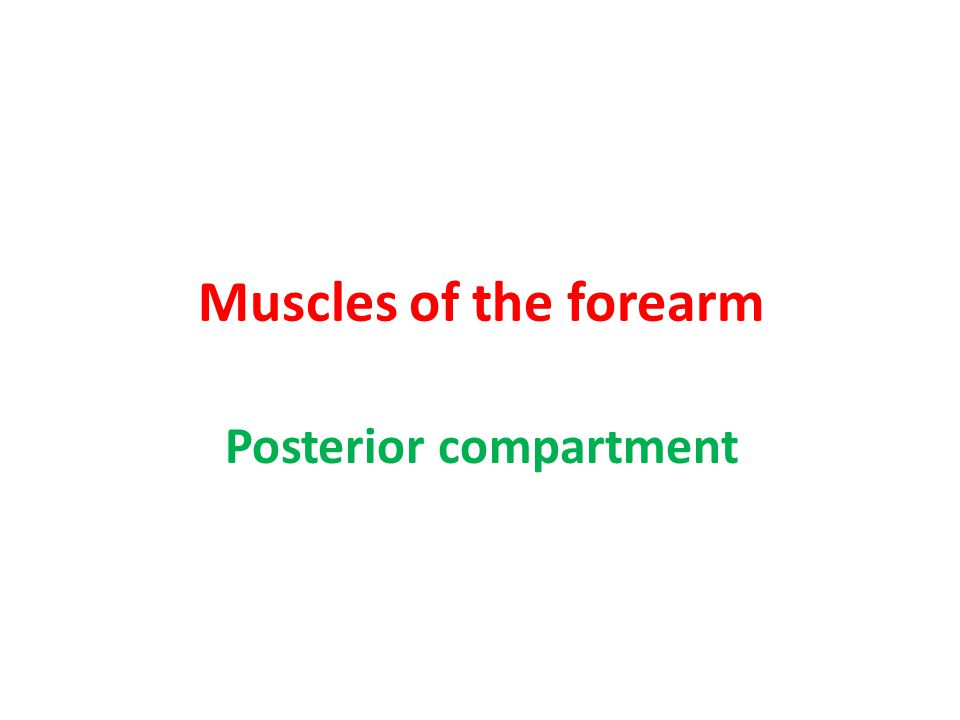 Muscles of the forearm Posterior compartment