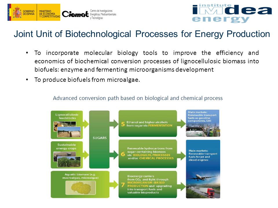 Joint Unit of Biotechnological Processes for Energy Production To incorporate molecular biology tools to improve the efficiency and economics of biochemical conversion processes of lignocellulosic biomass into biofuels: enzyme and fermenting microorganisms development To produce biofuels from microalgae.