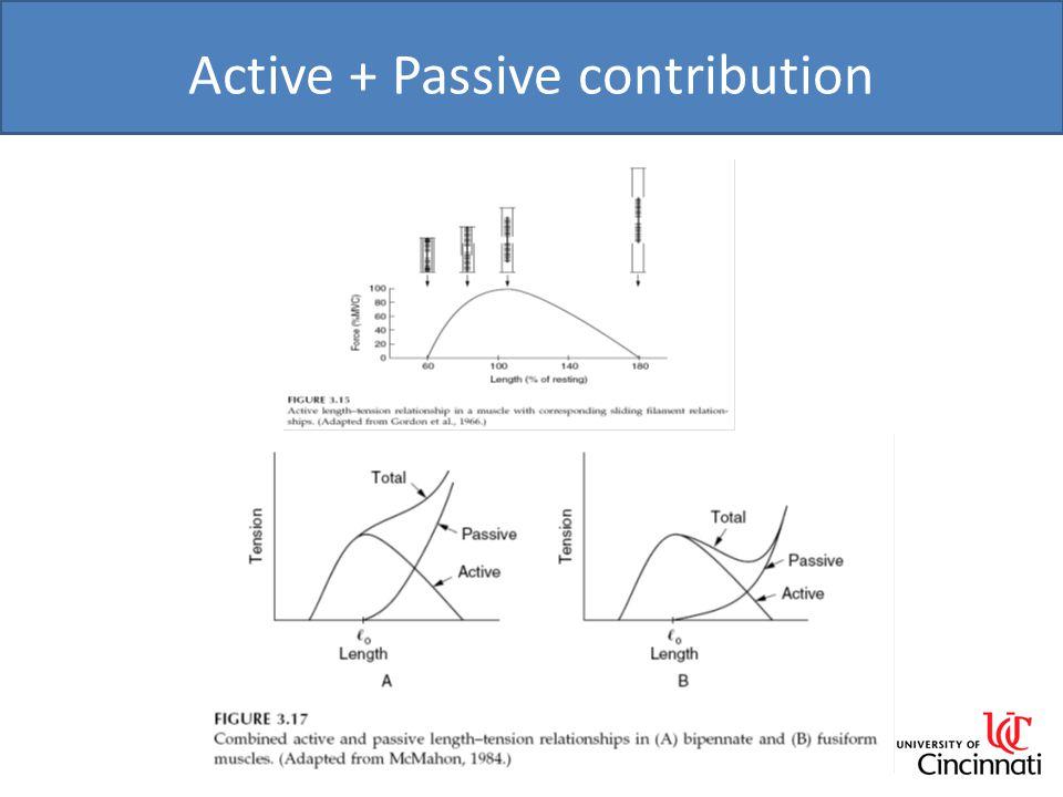 Active + Passive contribution 12