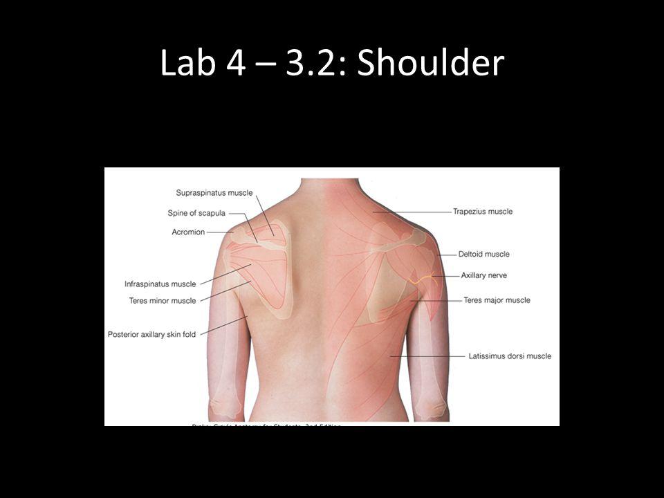Lab 4 – 3.2: Shoulder