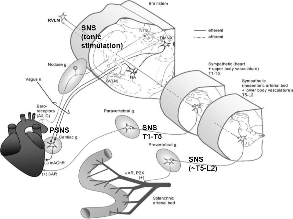 SNS T1-T5 PSNS SNS (~T5-L2) SNS (tonic stimulation)