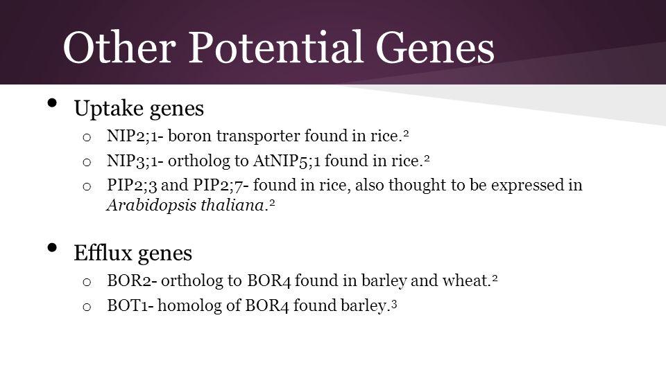 Other Potential Genes Uptake genes o NIP2;1- boron transporter found in rice. 2 o NIP3;1- ortholog to AtNIP5;1 found in rice. 2 o PIP2;3 and PIP2;7- f