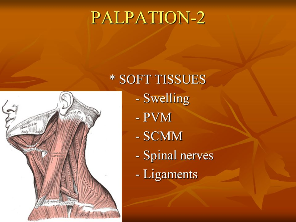 PALPATION-3 * Neighbouring structures - Arterial pulse - Arterial pulse - Lymph nodules - Lymph nodules - Thyroid - Thyroid - Trachea - Trachea - Others - Others