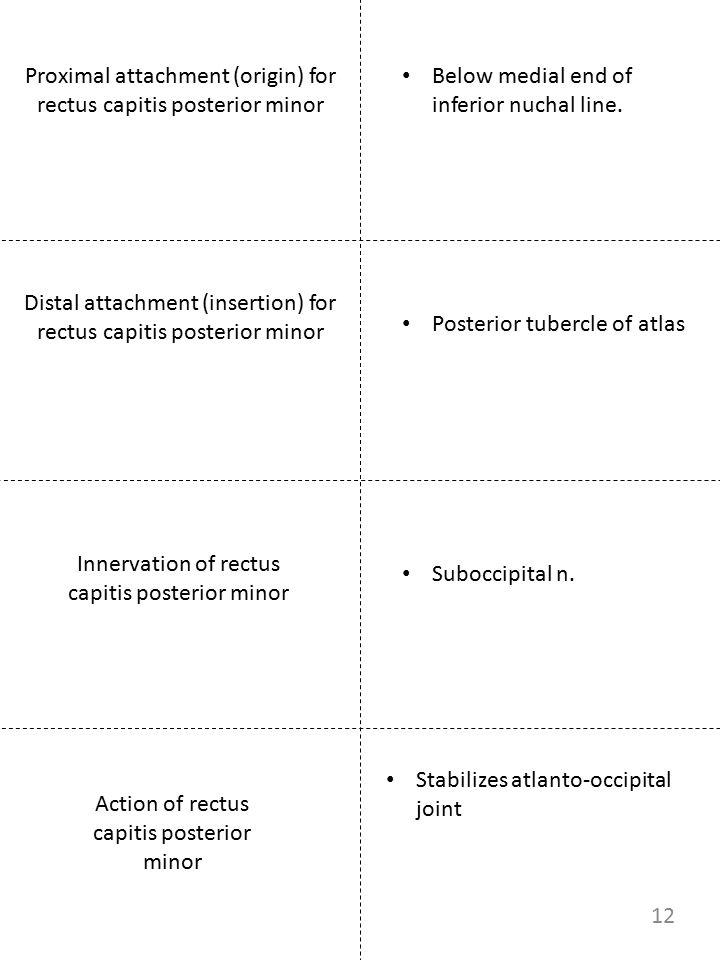Proximal attachment (origin) for rectus capitis posterior minor Innervation of rectus capitis posterior minor Below medial end of inferior nuchal line