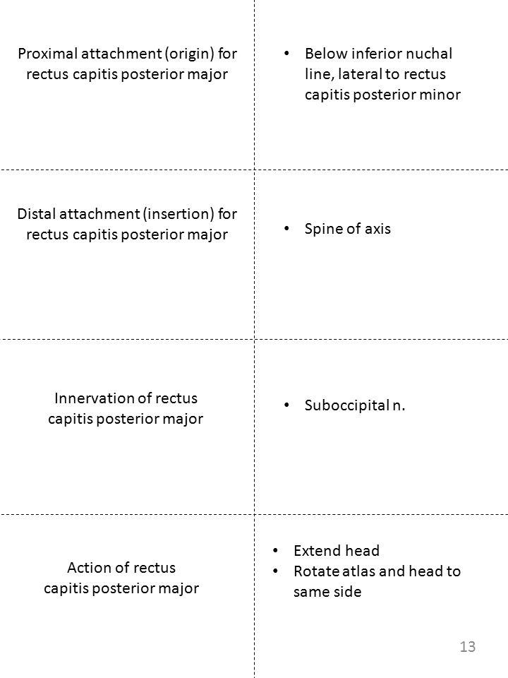 Proximal attachment (origin) for rectus capitis posterior major Innervation of rectus capitis posterior major Below inferior nuchal line, lateral to r