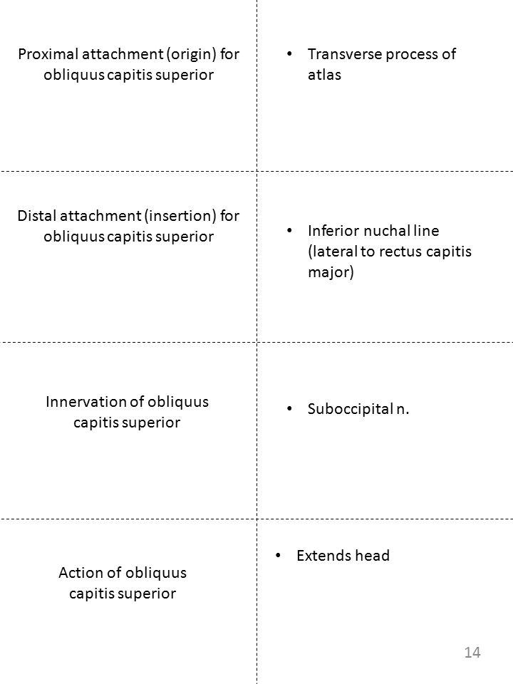 Proximal attachment (origin) for obliquus capitis superior Innervation of obliquus capitis superior Transverse process of atlas Suboccipital n. Extend