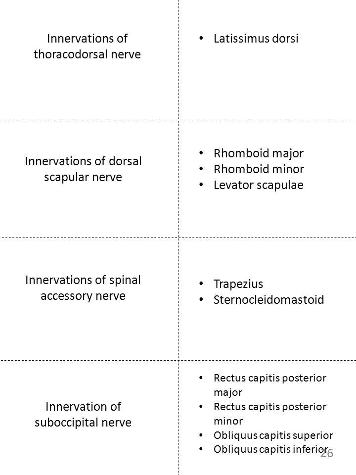 Innervations of thoracodorsal nerve Latissimus dorsi Rhomboid major Rhomboid minor Levator scapulae Innervations of dorsal scapular nerve Innervations
