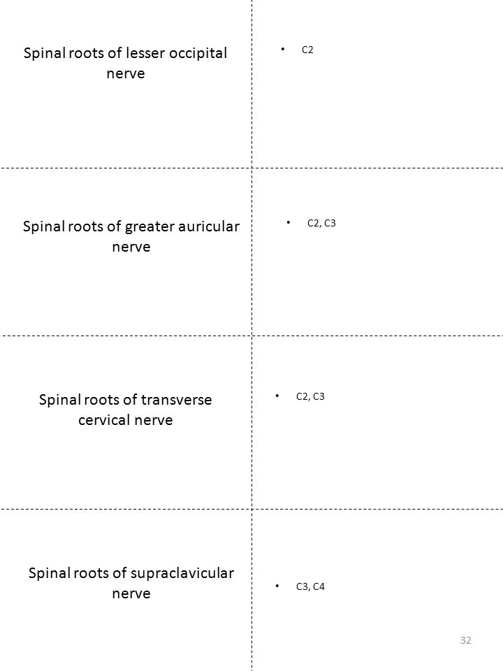 Spinal roots of lesser occipital nerve C2 32 Spinal roots of greater auricular nerve C2, C3 Spinal roots of transverse cervical nerve C2, C3 Spinal ro
