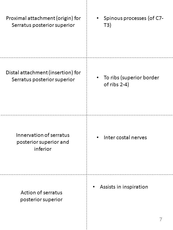 Proximal attachment (origin) for Serratus posterior superior Innervation of serratus posterior superior and inferior Spinous processes (of C7- T3) Int