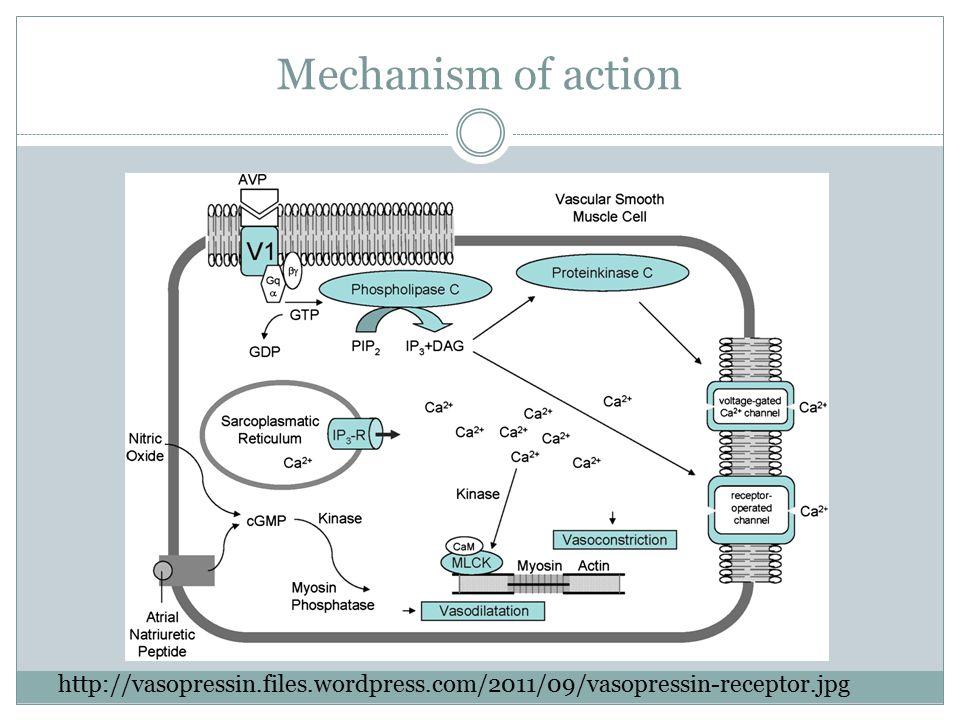 Mechanism of action http://vasopressin.files.wordpress.com/2011/09/vasopressin-receptor.jpg