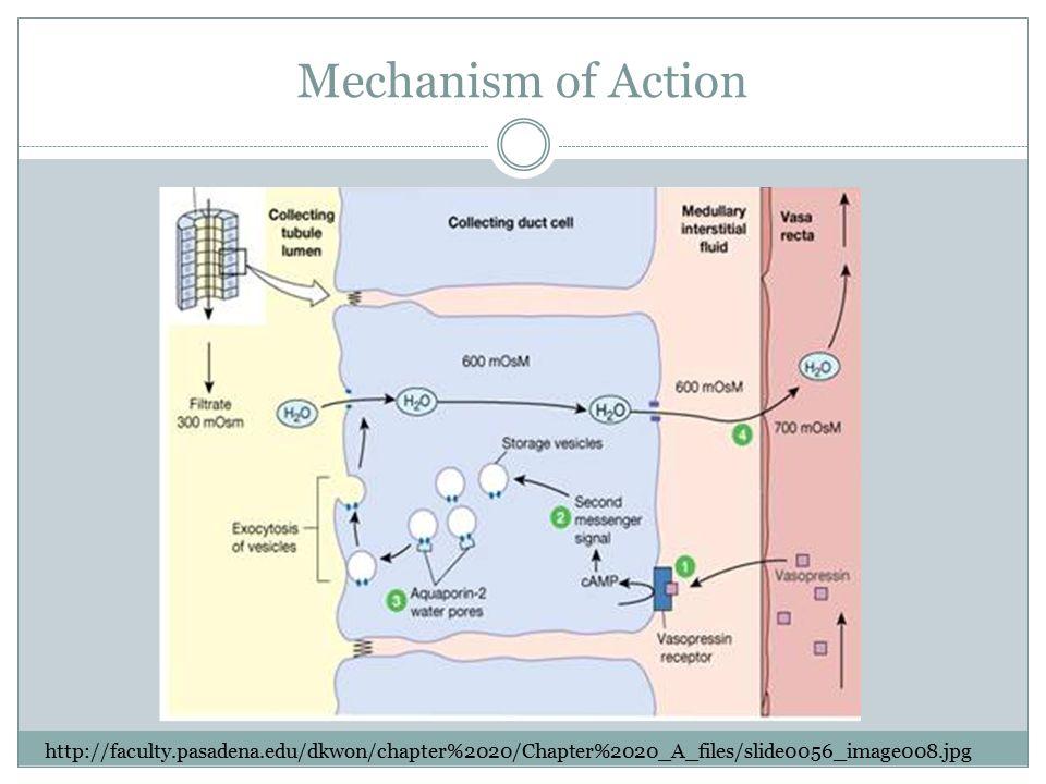 Mechanism of Action http://faculty.pasadena.edu/dkwon/chapter%2020/Chapter%2020_A_files/slide0056_image008.jpg