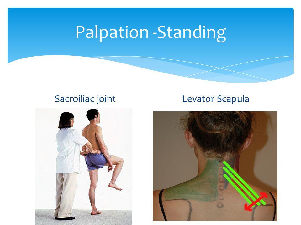 Palpation -Standing Sacroiliac jointLevator Scapula