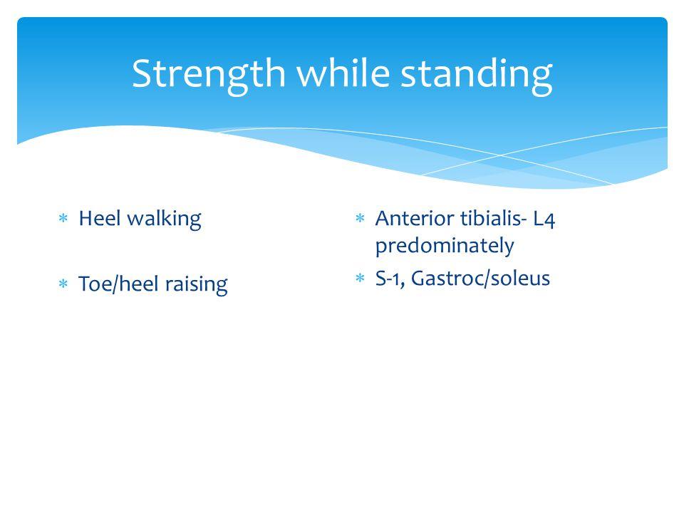 Strength while standing  Heel walking  Toe/heel raising  Anterior tibialis- L4 predominately  S-1, Gastroc/soleus