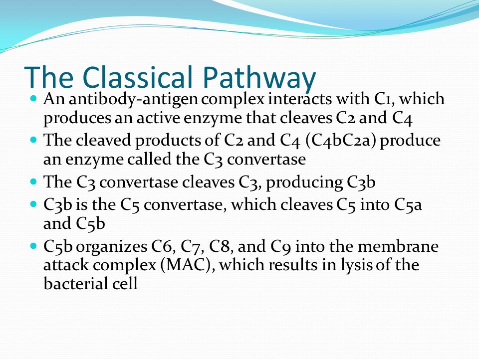 The Classical Pathway An antibody-antigen complex interacts with C1, which produces an active enzyme that cleaves C2 and C4 The cleaved products of C2 and C4 (C4bC2a) produce an enzyme called the C3 convertase The C3 convertase cleaves C3, producing C3b C3b is the C5 convertase, which cleaves C5 into C5a and C5b C5b organizes C6, C7, C8, and C9 into the membrane attack complex (MAC), which results in lysis of the bacterial cell