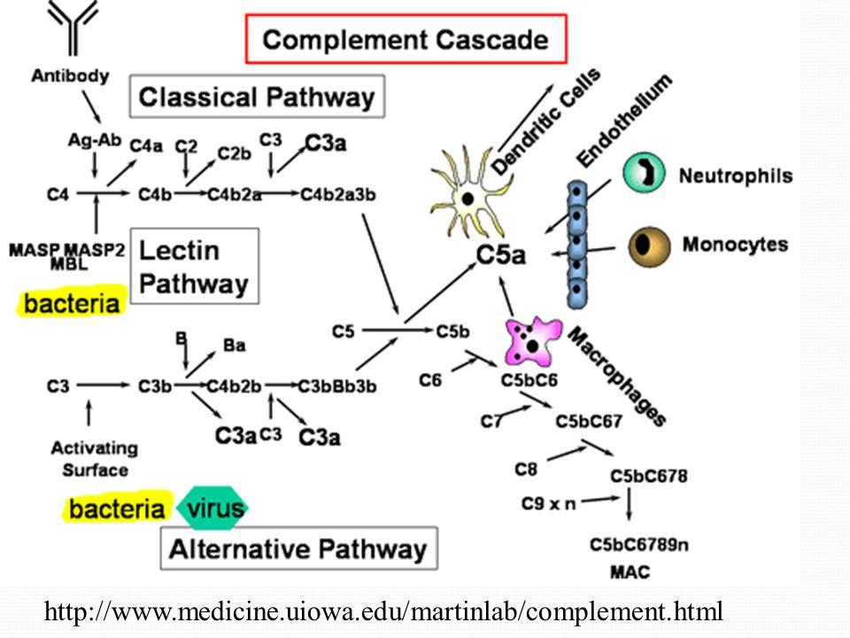 http://www.medicine.uiowa.edu/martinlab/complement.html