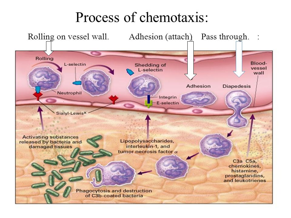 Biological effects of complement activation 1. Anaphylatoxin (C3a, C5a) - Induce histamine release from mast cells. release chemotactic agents. 2. Ops