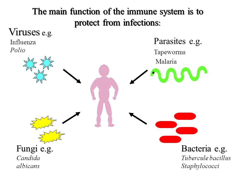 Mosby items and derived items © 2006 by Mosby, Inc. Objectives 1. First (non-specific immunity) and second (adaptive immunity) lines of defense 2.Comp