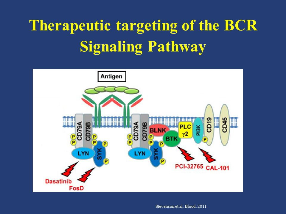 Therapeutic targeting of the BCR Signaling Pathway Stevenson et al. Blood. 2011.