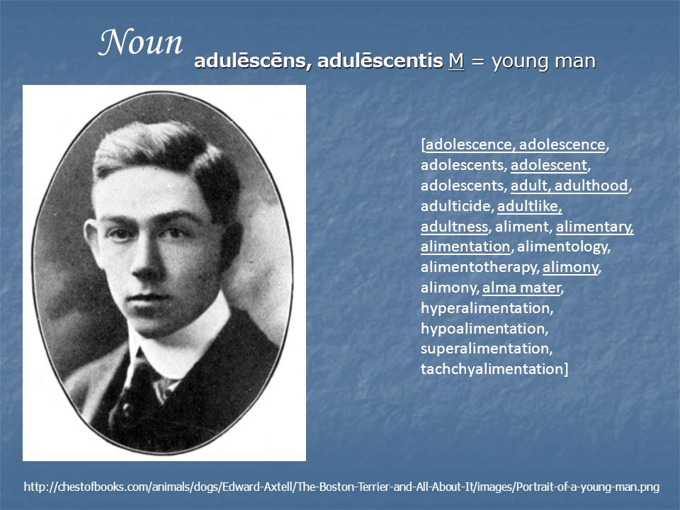 adulēscēns, adulēscentis M = young man [adolescence, adolescence, adolescents, adolescent, adolescents, adult, adulthood, adulticide, adultlike, adultness, aliment, alimentary, alimentation, alimentology, alimentotherapy, alimony, alimony, alma mater, hyperalimentation, hypoalimentation, superalimentation, tachchyalimentation] Noun http://chestofbooks.com/animals/dogs/Edward-Axtell/The-Boston-Terrier-and-All-About-It/images/Portrait-of-a-young-man.png