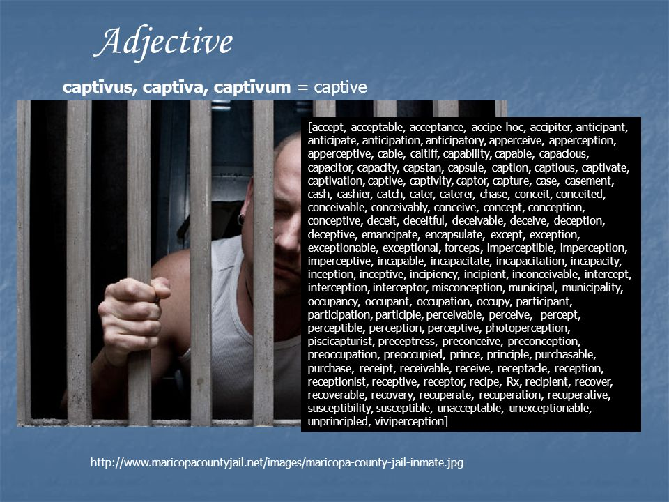 Adjective captīvus, captīva, captīvum = captive [accept, acceptable, acceptance, accipe hoc, accipiter, anticipant, anticipate, anticipation, anticipatory, apperceive, apperception, apperceptive, cable, caitiff, capability, capable, capacious, capacitor, capacity, capstan, capsule, caption, captious, captivate, captivation, captive, captivity, captor, capture, case, casement, cash, cashier, catch, cater, caterer, chase, conceit, conceited, conceivable, conceivably, conceive, concept, conception, conceptive, deceit, deceitful, deceivable, deceive, deception, deceptive, emancipate, encapsulate, except, exception, exceptionable, exceptional, forceps, imperceptible, imperception, imperceptive, incapable, incapacitate, incapacitation, incapacity, inception, inceptive, incipiency, incipient, inconceivable, intercept, interception, interceptor, misconception, municipal, municipality, occupancy, occupant, occupation, occupy, participant, participation, participle, perceivable, perceive, percept, perceptible, perception, perceptive, photoperception, piscicapturist, preceptress, preconceive, preconception, preoccupation, preoccupied, prince, principle, purchasable, purchase, receipt, receivable, receive, receptacle, reception, receptionist, receptive, receptor, recipe, Rx, recipient, recover, recoverable, recovery, recuperate, recuperation, recuperative, susceptibility, susceptible, unacceptable, unexceptionable, unprincipled, viviperception] http://www.maricopacountyjail.net/images/maricopa-county-jail-inmate.jpg