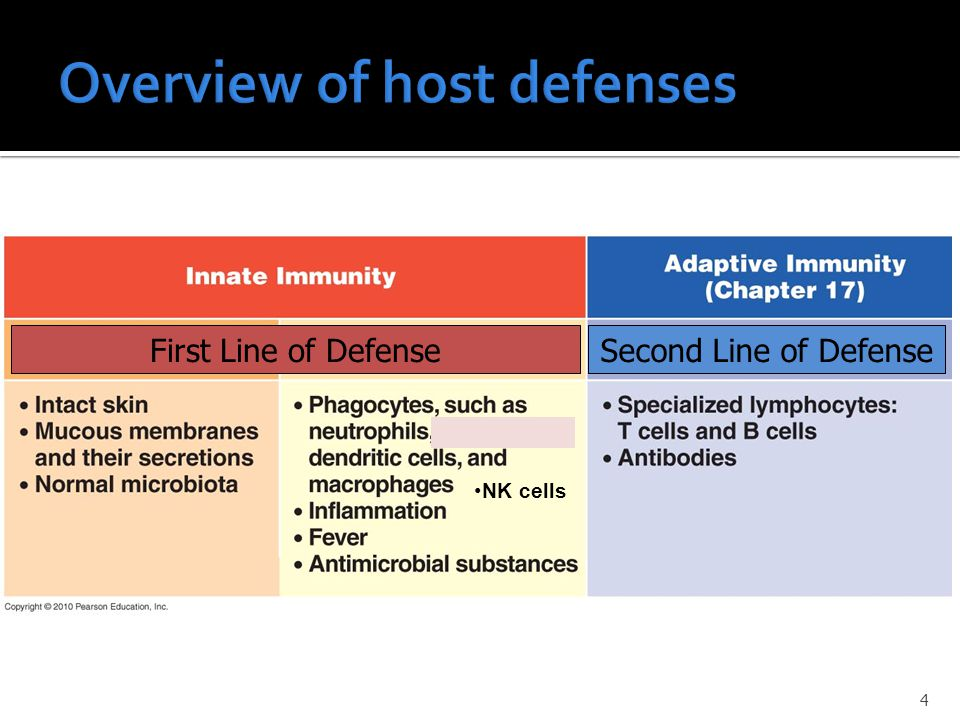 First Line of DefenseSecond Line of Defense NK cells 4