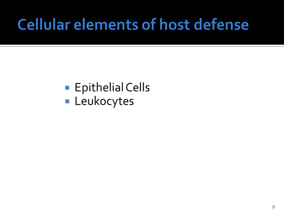  Epithelial Cells  Leukocytes 9