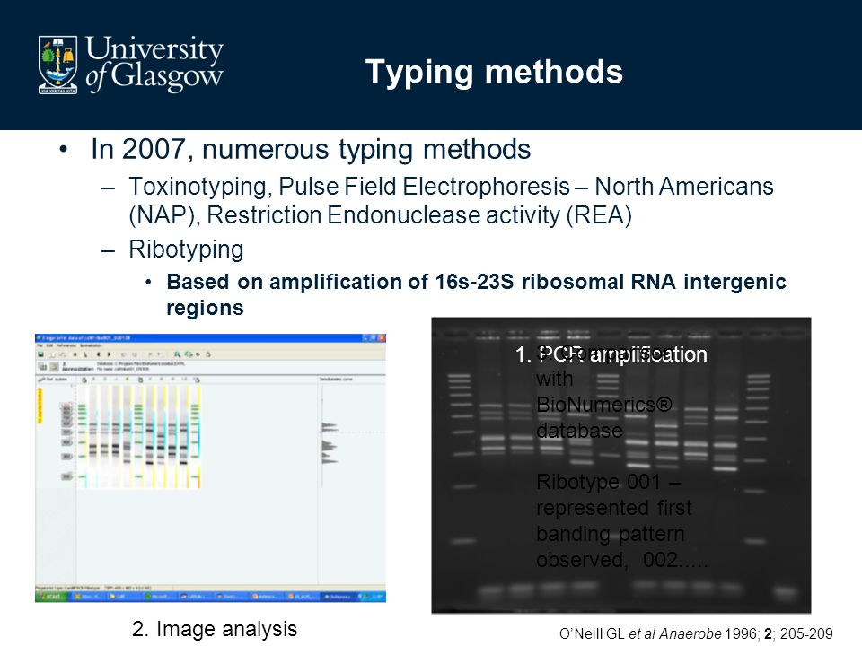 Typing methods In 2007, numerous typing methods –Toxinotyping, Pulse Field Electrophoresis – North Americans (NAP), Restriction Endonuclease activity (REA) –Ribotyping Based on amplification of 16s-23S ribosomal RNA intergenic regions 2.