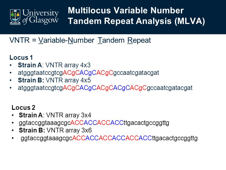 Multilocus Variable Number Tandem Repeat Analysis (MLVA) VNTR = Variable-Number Tandem Repeat Locus 1 Strain A: VNTR array 4x3 atgggtaatccgtcgACgCACgCACgCgccaatcgatacgat Strain B: VNTR array 4x5 atgggtaatccgtcgACgCACgCACgCACgCACgCgccaatcgatacgat Locus 2 Strain A: VNTR array 3x4 ggtaccggtaaagcgcACCACCACCACCttgacactgccggttg Strain B: VNTR array 3x6 ggtaccggtaaagcgcACCACCACCACCACCACCttgacactgccggttg