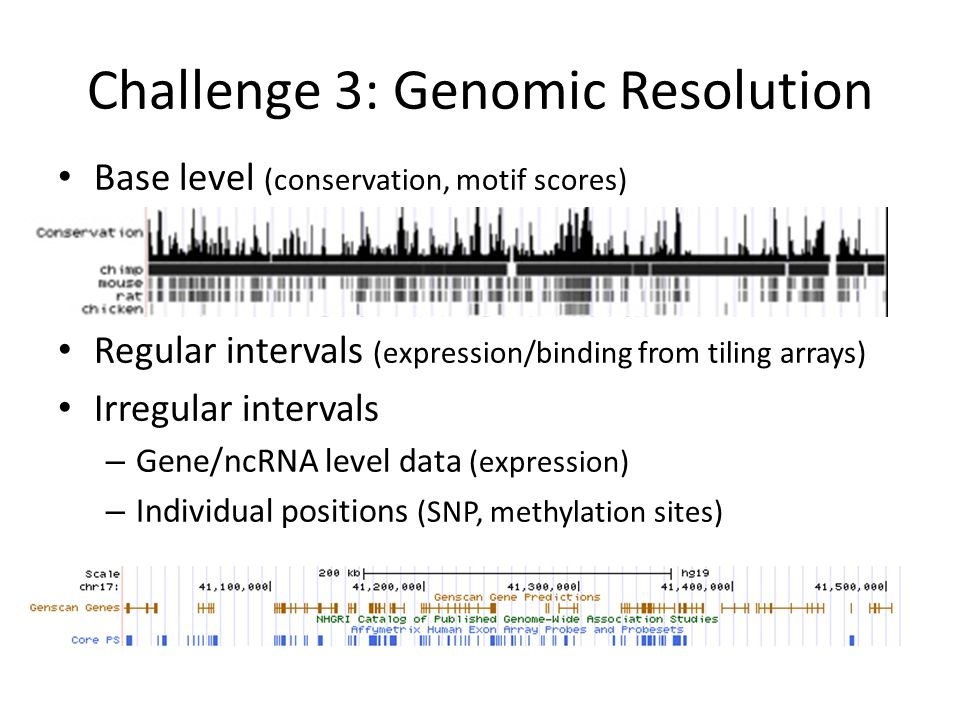 Challenge 3: Genomic Resolution Base level (conservation, motif scores) Regular intervals (expression/binding from tiling arrays) Irregular intervals – Gene/ncRNA level data (expression) – Individual positions (SNP, methylation sites)