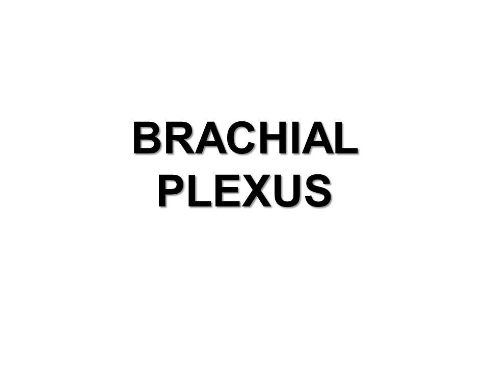 OBJECTIVES.DEFINATION OF PLEXUS HOW IT IS FORMED DIFFERENT PARTS OF BRACHIAL PLEXUS.