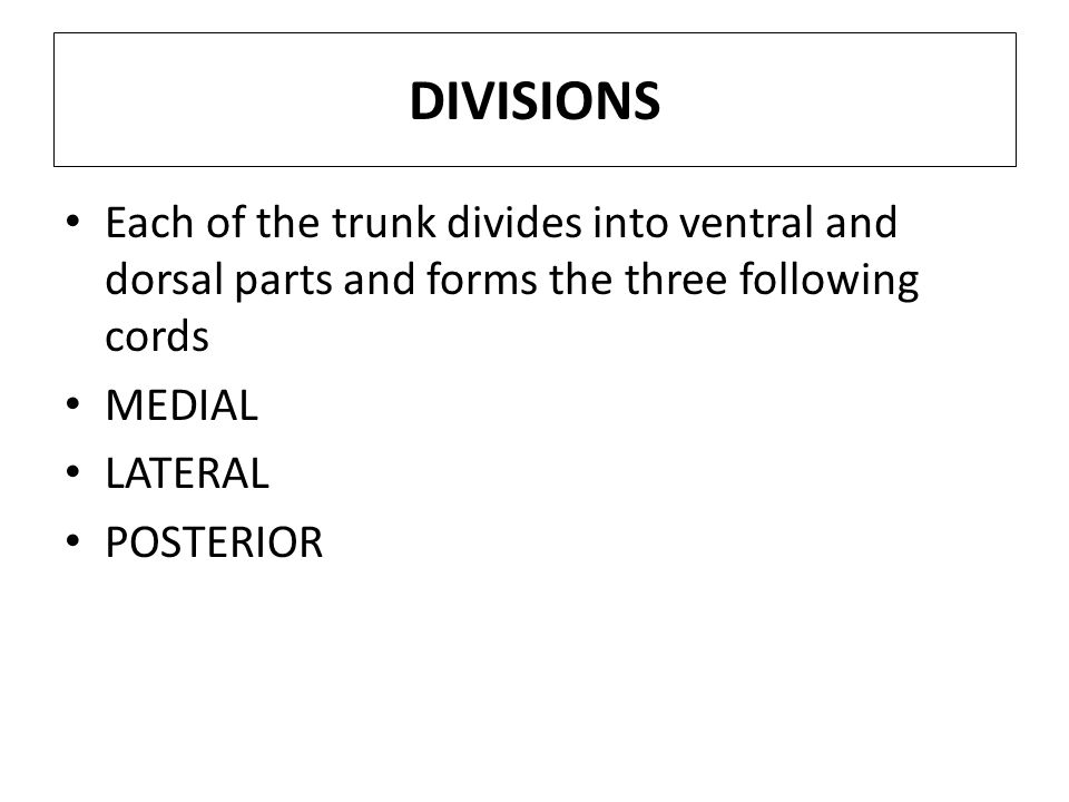 DIVISIONS Each of the trunk divides into ventral and dorsal parts and forms the three following cords MEDIAL LATERAL POSTERIOR