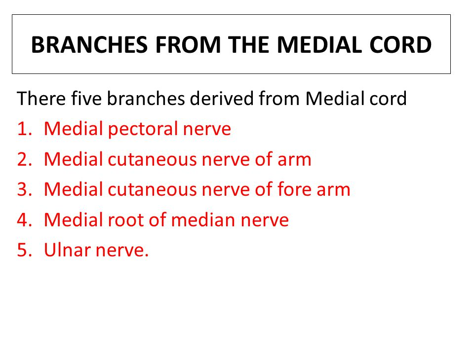 BRANCHES FROM THE MEDIAL CORD There five branches derived from Medial cord 1.Medial pectoral nerve 2.Medial cutaneous nerve of arm 3.Medial cutaneous