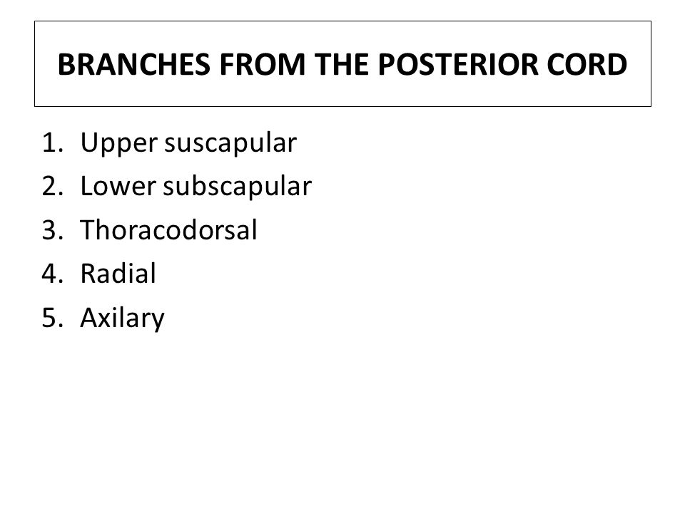 BRANCHES FROM THE POSTERIOR CORD 1.Upper suscapular 2.Lower subscapular 3.Thoracodorsal 4.Radial 5.Axilary