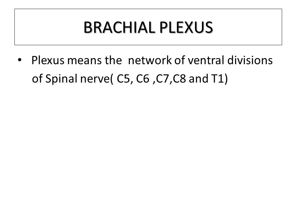 BRANCHES FROM THE MEDIAL CORD There five branches derived from Medial cord 1.Medial pectoral nerve 2.Medial cutaneous nerve of arm 3.Medial cutaneous nerve of fore arm 4.Medial root of median nerve 5.Ulnar nerve.