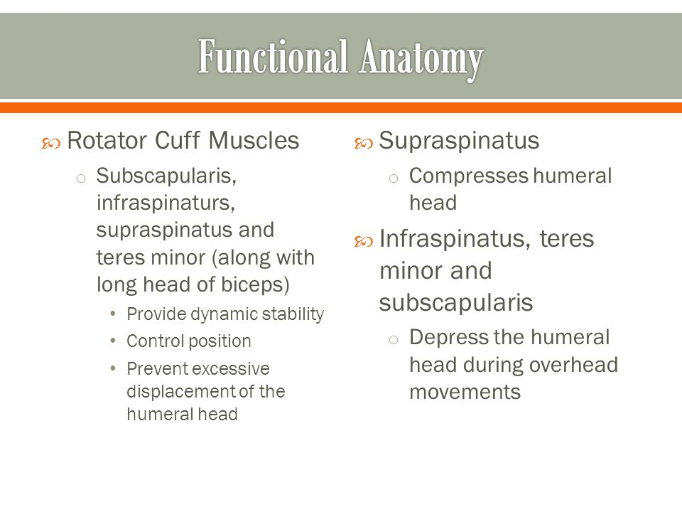  Rotator Cuff Muscles o Subscapularis, infraspinaturs, supraspinatus and teres minor (along with long head of biceps) Provide dynamic stability Contr