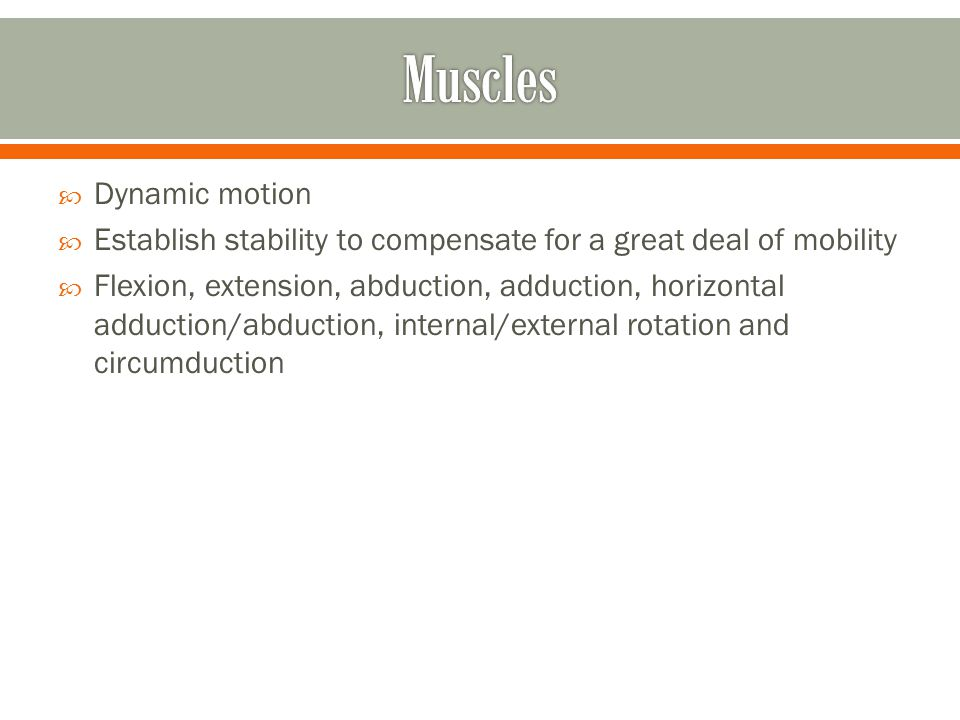  Dynamic motion  Establish stability to compensate for a great deal of mobility  Flexion, extension, abduction, adduction, horizontal adduction/abd