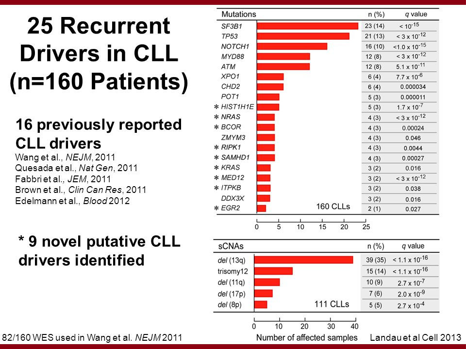 16 previously reported CLL drivers Wang et al., NEJM, 2011 Quesada et al., Nat Gen, 2011 Fabbri et al., JEM, 2011 Brown et al., Clin Can Res, 2011 Edelmann et al., Blood 2012 25 Recurrent Drivers in CLL (n=160 Patients) 82/160 WES used in Wang et al.